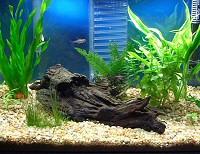 akvarium-kellekek