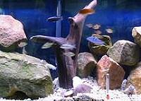 Akváriumi dekoráció: csodaszép díszek a vízben