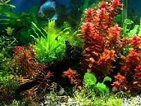 akvarium-epites