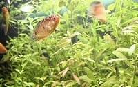 tengeri-akvarisztika