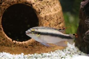 Akváriumi kellékek: csodaszép díszek a vízben