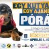 Nem áprilisi tréfa! Kutyák és macskák várják új gazdáikat az Illatos úton