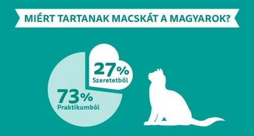 macskatartas1