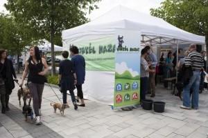 A kutyák örökbefogadását népszerűsíti a Belvárosi kutyafesztivál