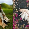 Éljenek a legjobb állati anyukák!