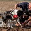 Elég kemény vagy? Jön a Hard Dog Race 2.0