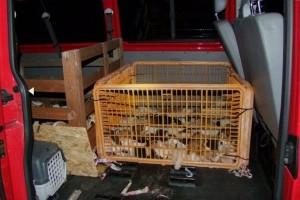 Több mint ötven kölyökkutyát zsúfolt be egy autóba egy olasz férfi Zalában