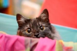 10 hang, amit ki nem állnak a macskák
