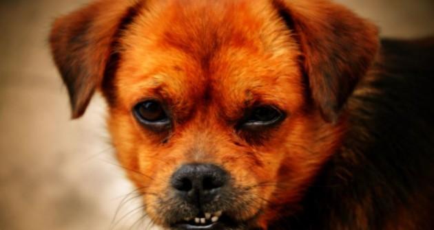 Felismered, hogy mikor, miért morog a kutyád?