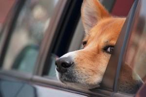 Kutyával is bemehetnek az utazók a Mol töltőállomásaira