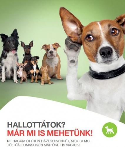 mol_kutya