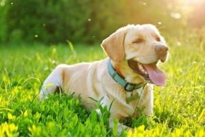 Gyakorlatban is tesztelték a kutya nyakörveket