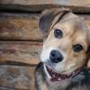Rex Alapítvány felhívása: kutyamentes augusztus 20-i tűzijátékot!
