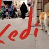 Filmajánló nem csak macskásoknak: Kedi-Isztambul macskái