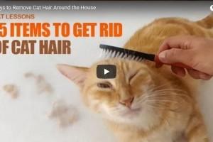 15 tárgy, amivel eltávolíthatjuk a macskaszőrt az otthonunkból