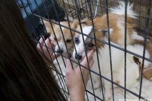 Több mint száz kutyát tartottak mostoha körülmények között Söjtörön