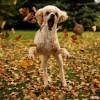 Legjobb őszi játék a falevélkupac