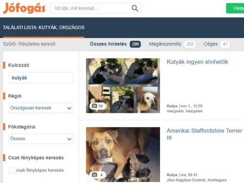 kutyahirdetes1