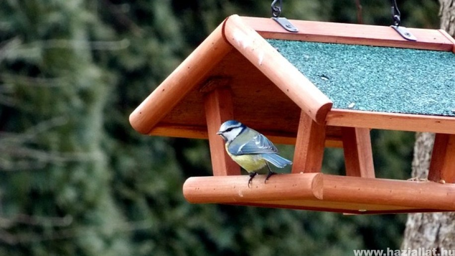 November közepén kezdődhet a madáretetési szezon