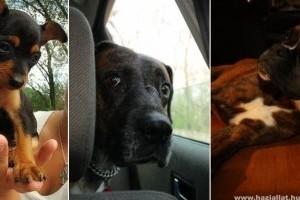 Sztárok kutyával – Interjú Farkas Zsófival, a La Bouche világhírű énekesnőjével
