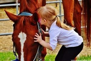 Ajándékozz lovas időt - terjed a neten