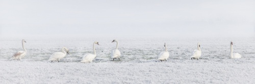 winter-2854179_1920_1