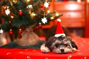 Kisállat karácsonyra? Gondoljuk meg kétszer!