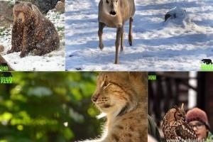 Rekordévet zárt a Budakeszi Vadaspark