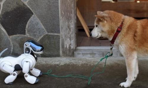 robot_kutya