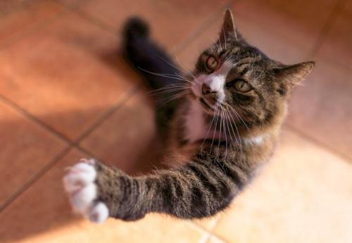 macska_talp