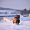 Hogyan hat a változékony téli időjárás a kutyákra?