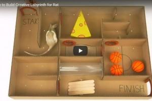 Kreatív labirintus hörcsögnek, patkánynak kartondobozból