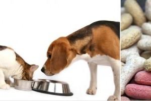 Évi 60 milliárdot költünk kutya- és macskaeledelekre