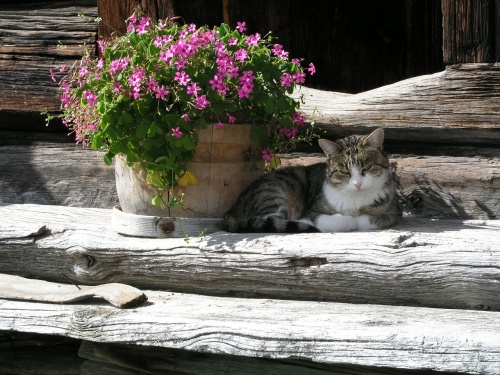 cat-1290474_1280