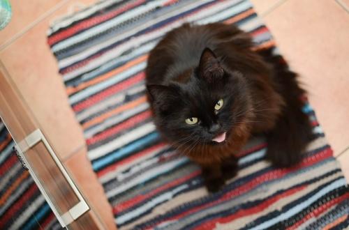 cat-3073432_1280