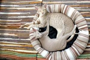 Macskatartáshoz tippek - 5 válasz a szakértőtől