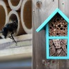 Rovarhotel magányos méheknek kiadó