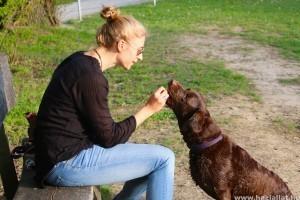 A kutya jutalmazása: a jóbol is megárt(hat) a sok?