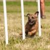 Kutyakiképzés nélkül nincs boldog eb