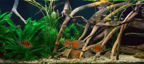 biotop_akvarium_01