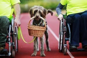 A JOY magazin a segítő kutyákért kampányol