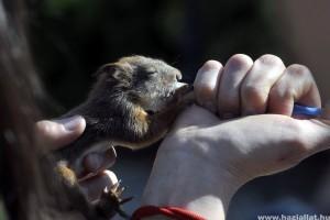 Állatmentés bemutató az állatkerti Föld Fesztiválon