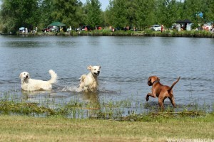 Kelet-Magyarország első kutyabarát fürdője nyílik májustól Tiszafüreden
