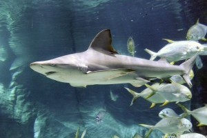 Két új cápával bővült a Tropicárium