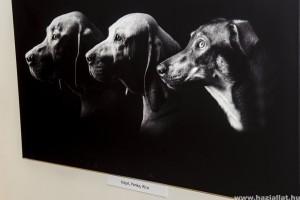 Csodaszép kutyák költöztek Karinthy egykori törzshelyére
