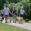 Közös kutyasétáltatásra hív hétvégén Gödöllőre a Royal Canin