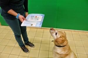 Új hazai kutatás: a túlsúlyos kutya és ember között hasonlóságot találtak