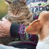 Valóban féltékeny a kutya vagy csak emberi tulajdonságokkal ruházzuk fel?