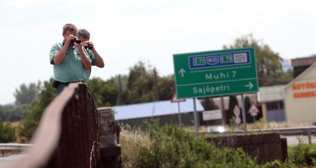 Medvét láttak Miskolcon - egy újabbat!