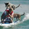 Nyári kutyás sport: szörf kutyával